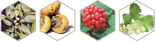 Ginseng, biloba ginkgo, saw palmetto son ingredientes afrodisíacos para mejorar las erecciones