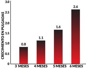 Estudios clinicos que garantizan los mayores resultados de erecciones mas grandes